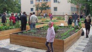 Egy éves a kerület első közösségi kertje